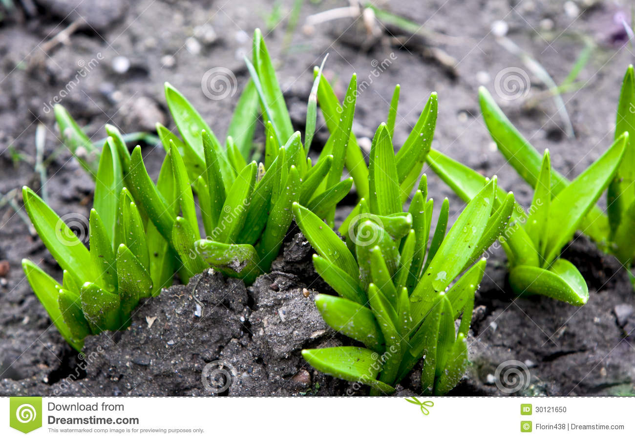 Growing Plants From Seeds Stock Photo - Image: 30121650