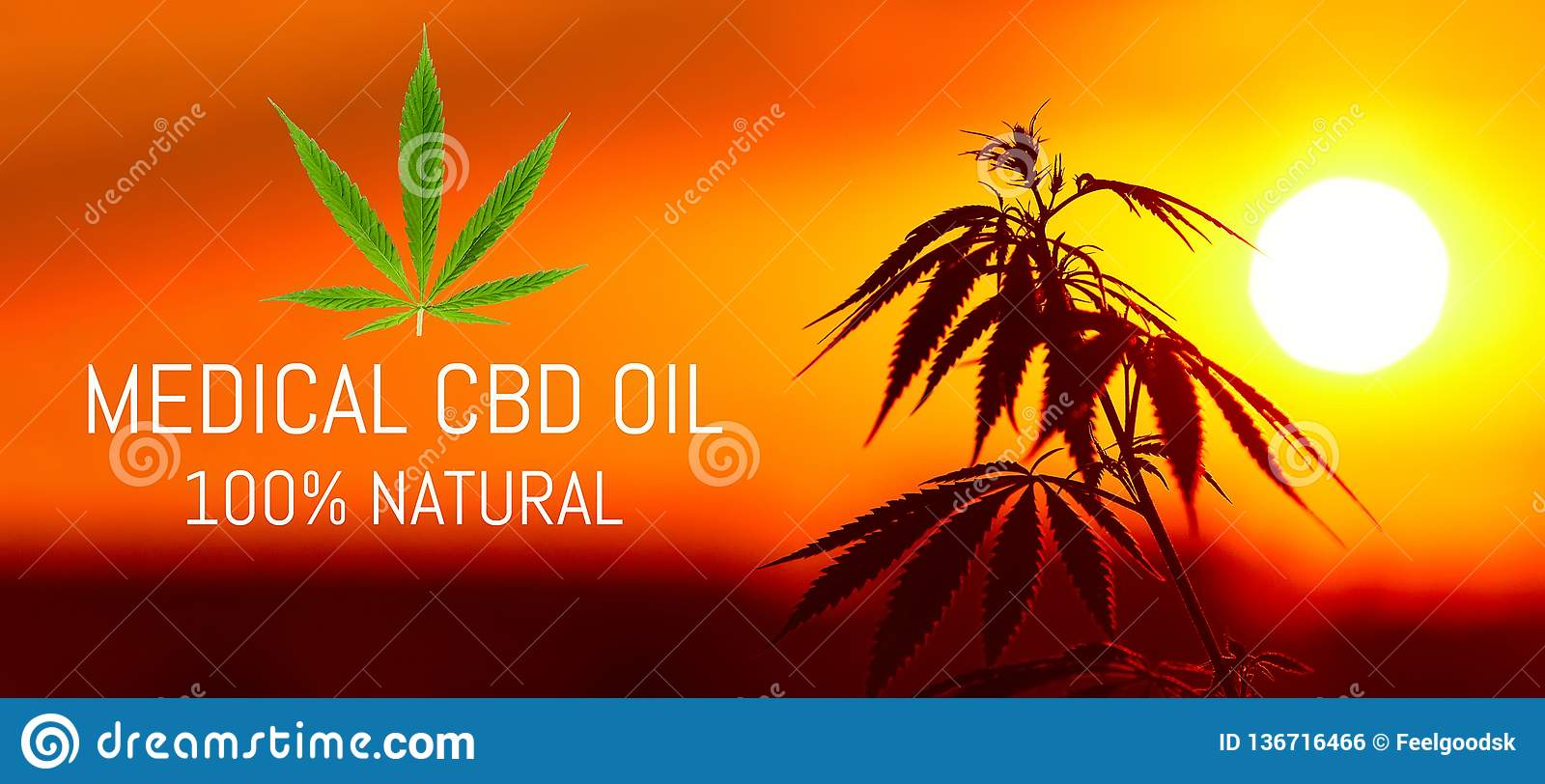 Growing Premium Medical Cannabis, CBD Oil Hemp Products  Natural