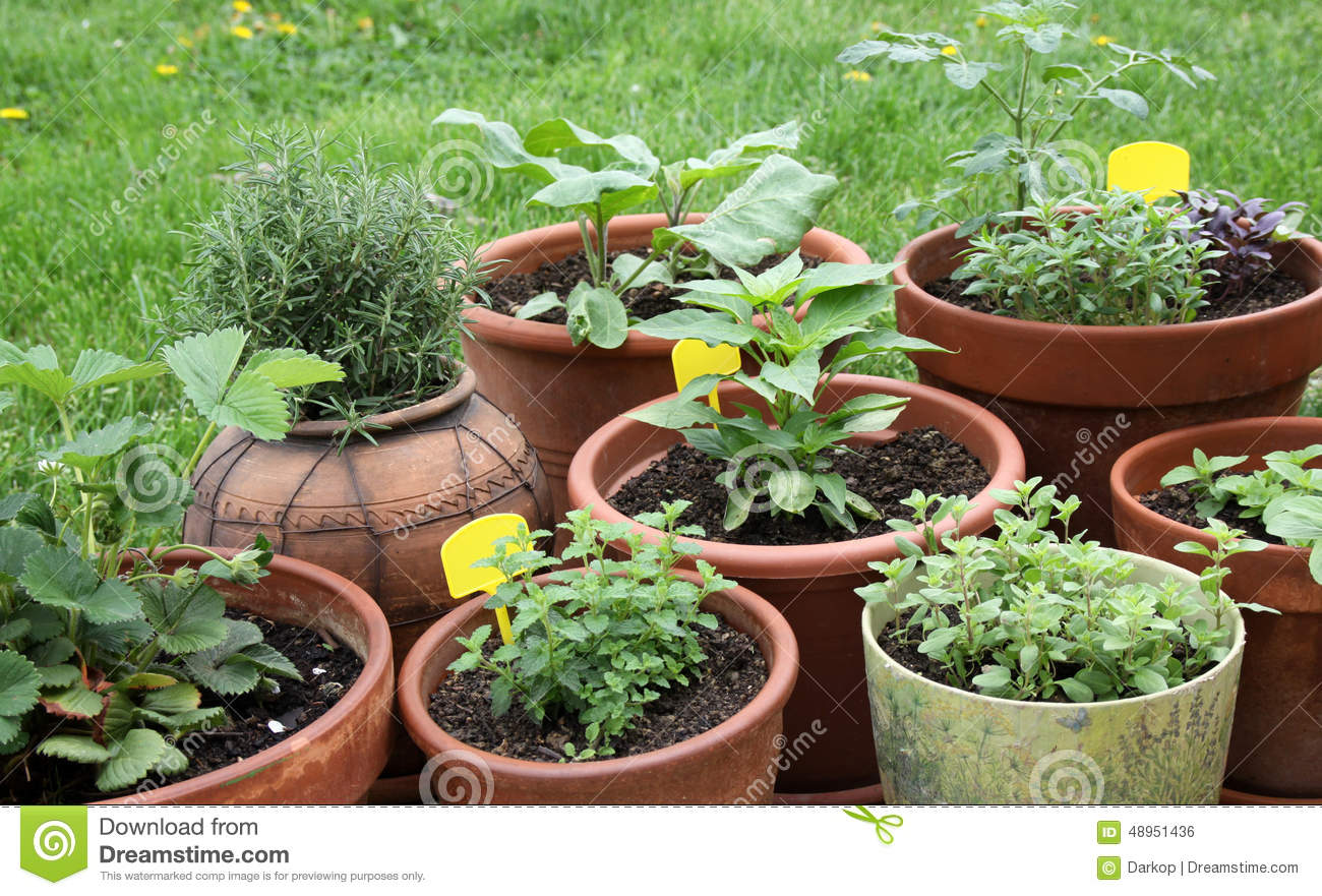 Growing Vegetable Herbs And Aromatic Plants In Decorative Pots – Decorative Herb Garden