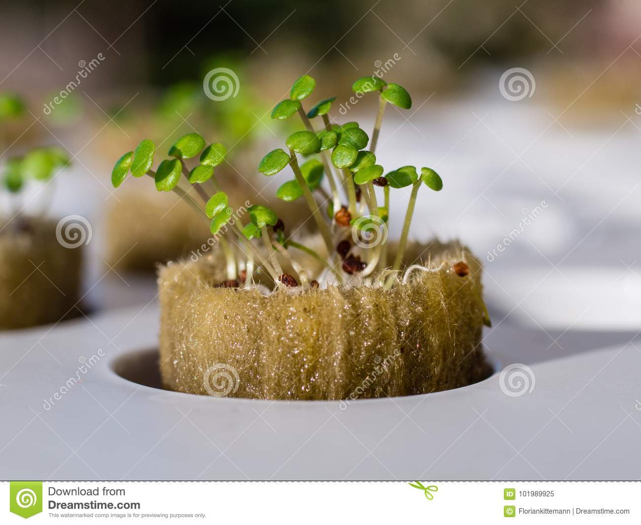 Growing Watercress And Herbs In Hydroponic System Stock Image ...