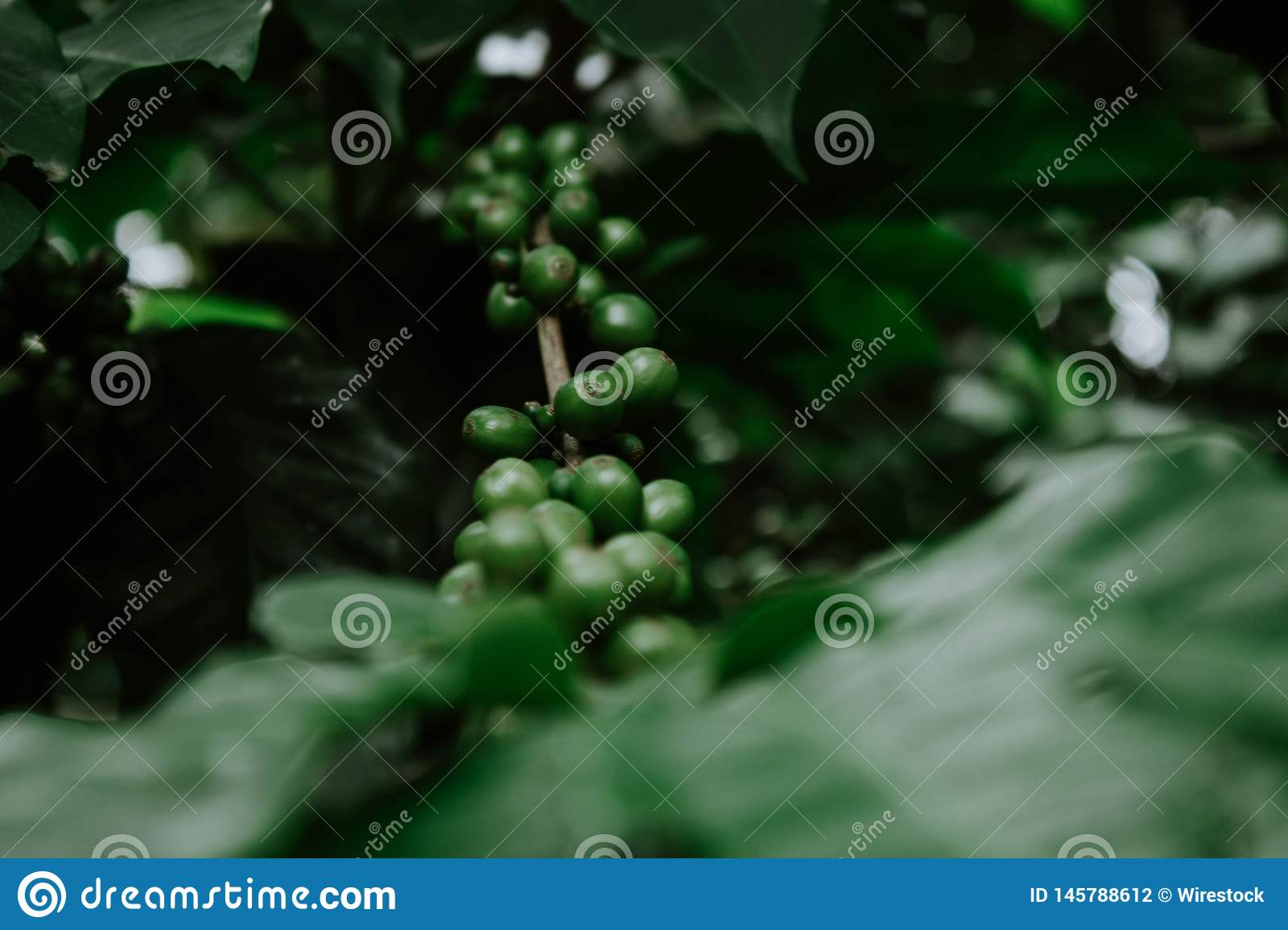 Growing green grape in a forest