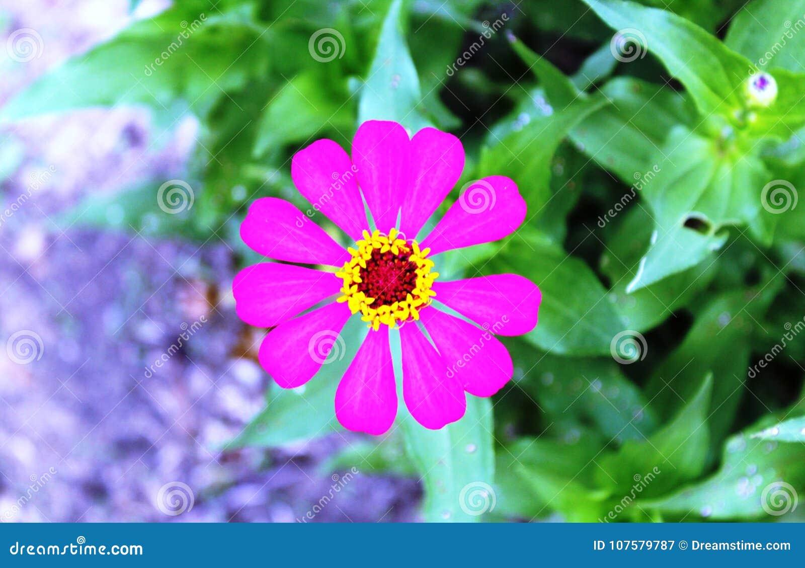 How to Make a Paper Zinnia Flower   934x1300