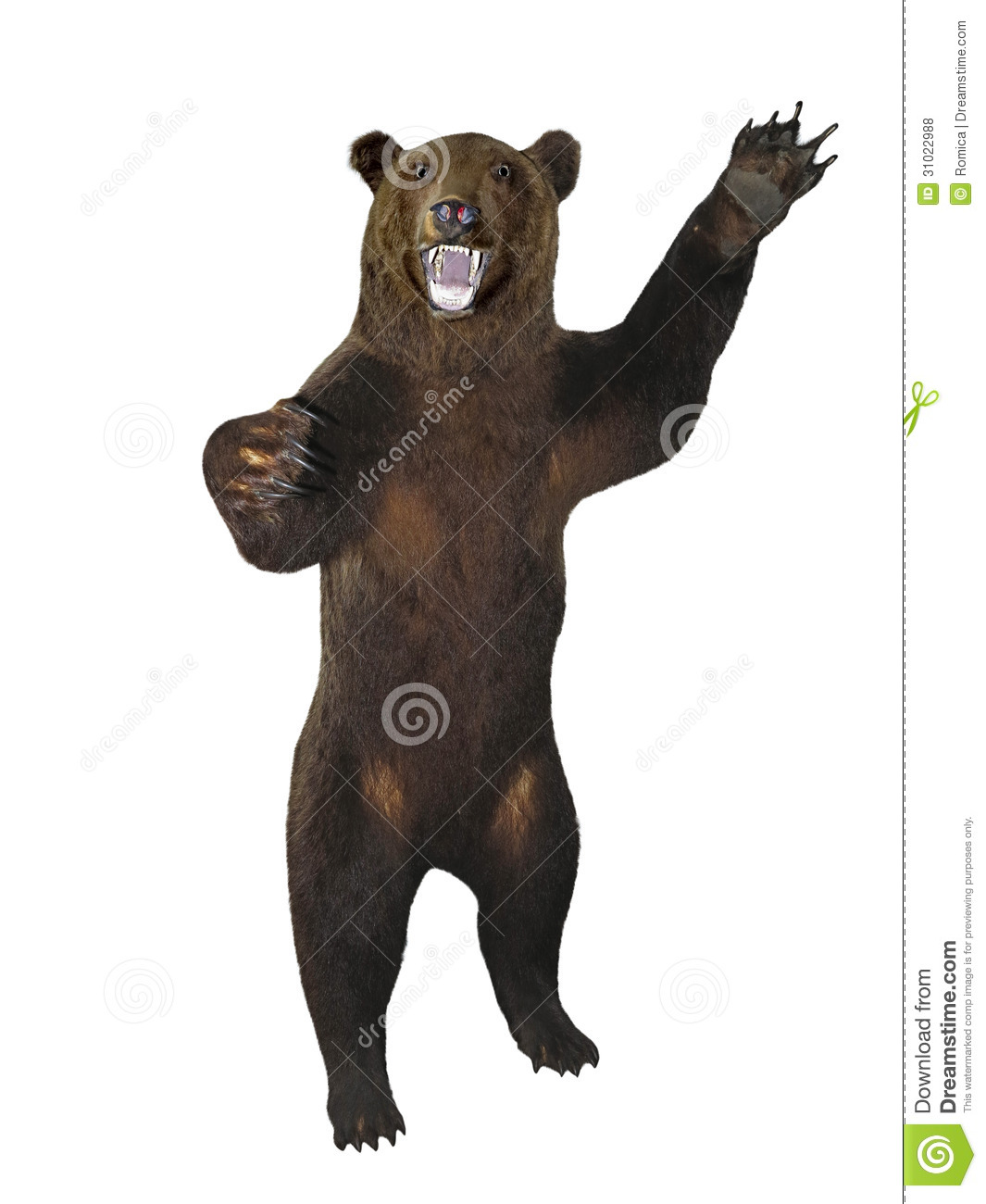 how to draw bear with open mouth