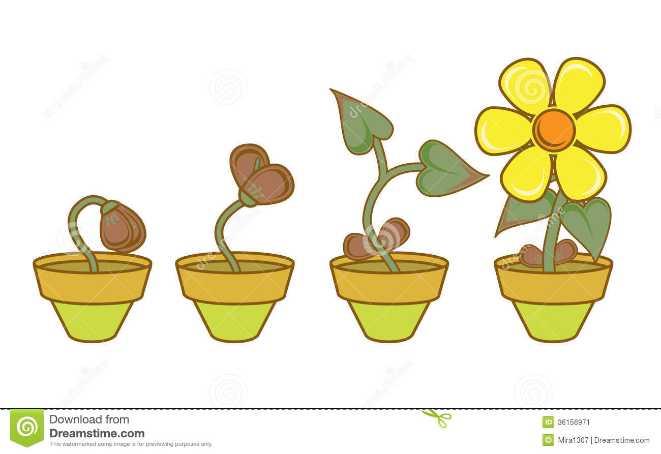 ... plant as an analogy of personal & professional growth and development