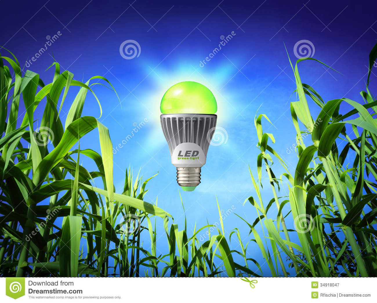Lighting and Ecology