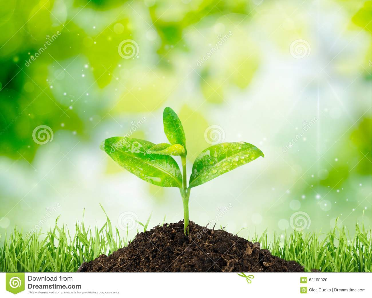 Nature Images 2mb: Growth Stock Photo