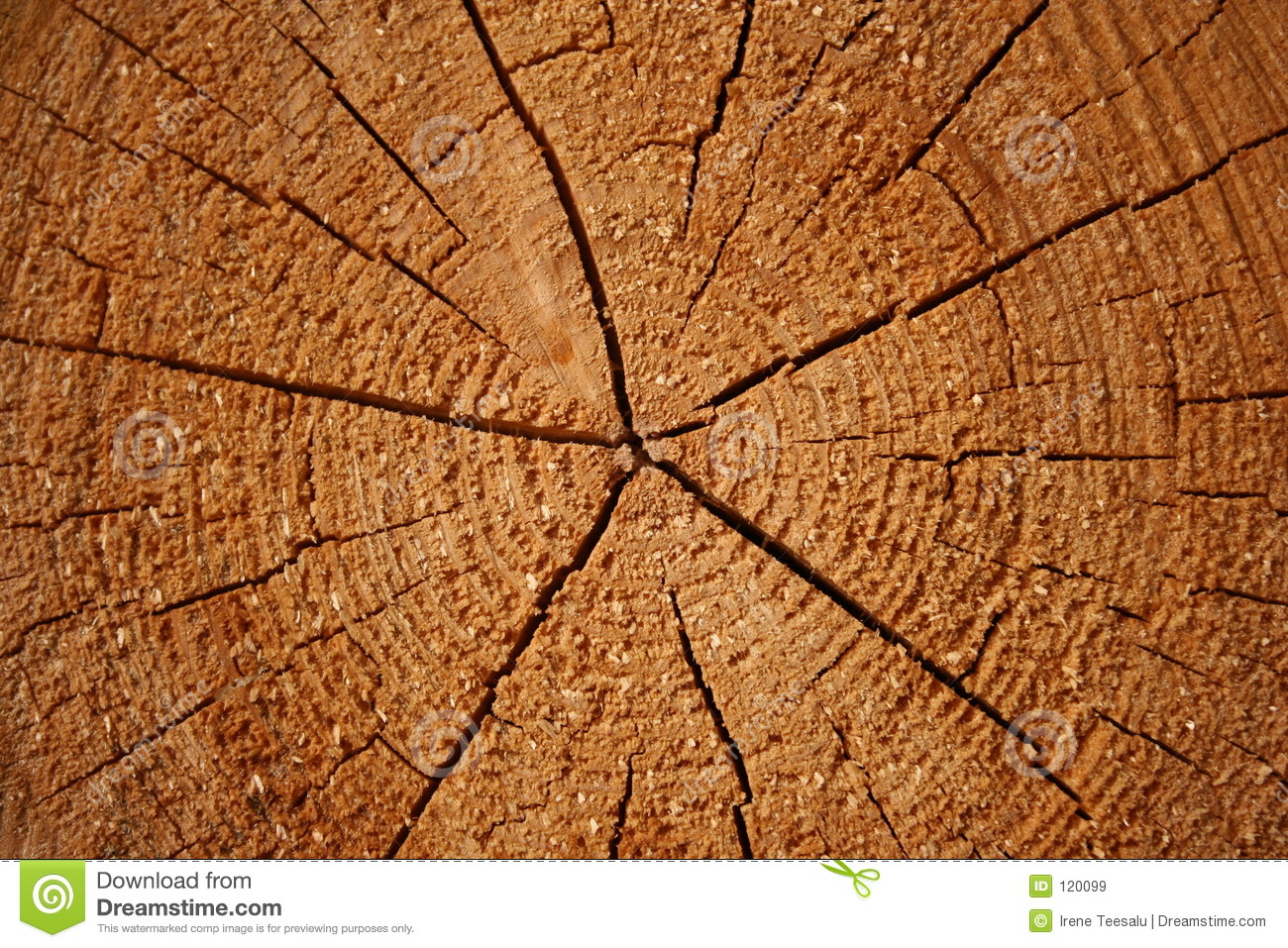 Growth rings on a log