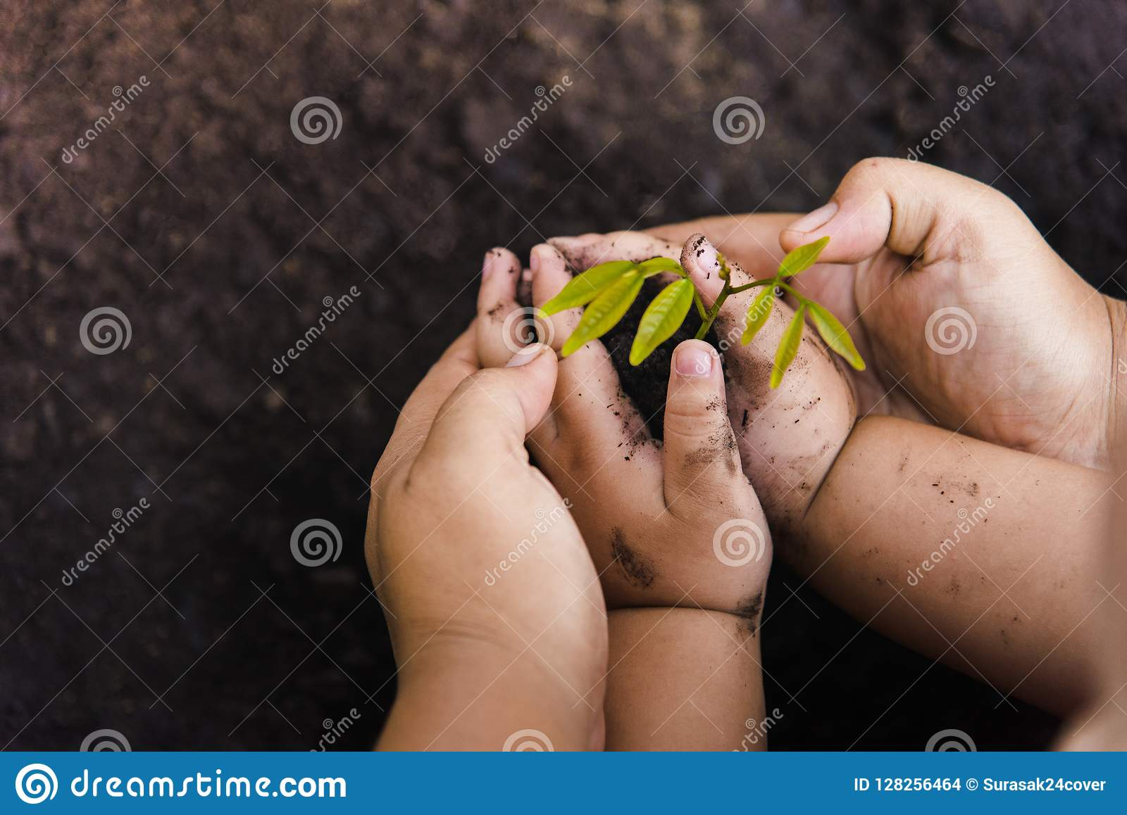 Growth tree Green background with black clay. Trees with money, saving money and growing hands.