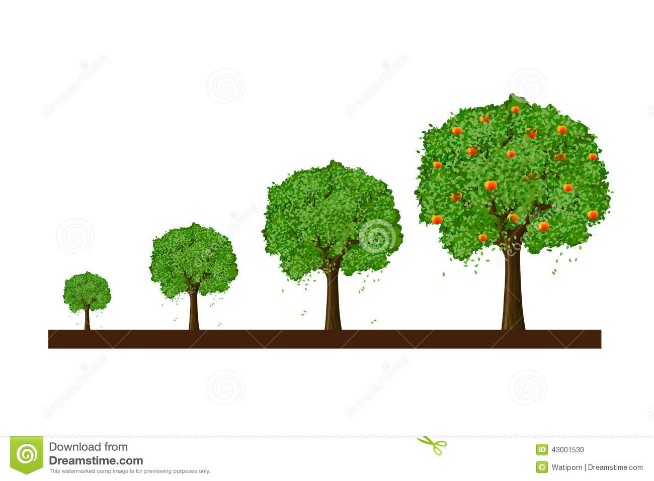 Stock Illustration Growth Tree Small To Big Image43001530 on Green Objects