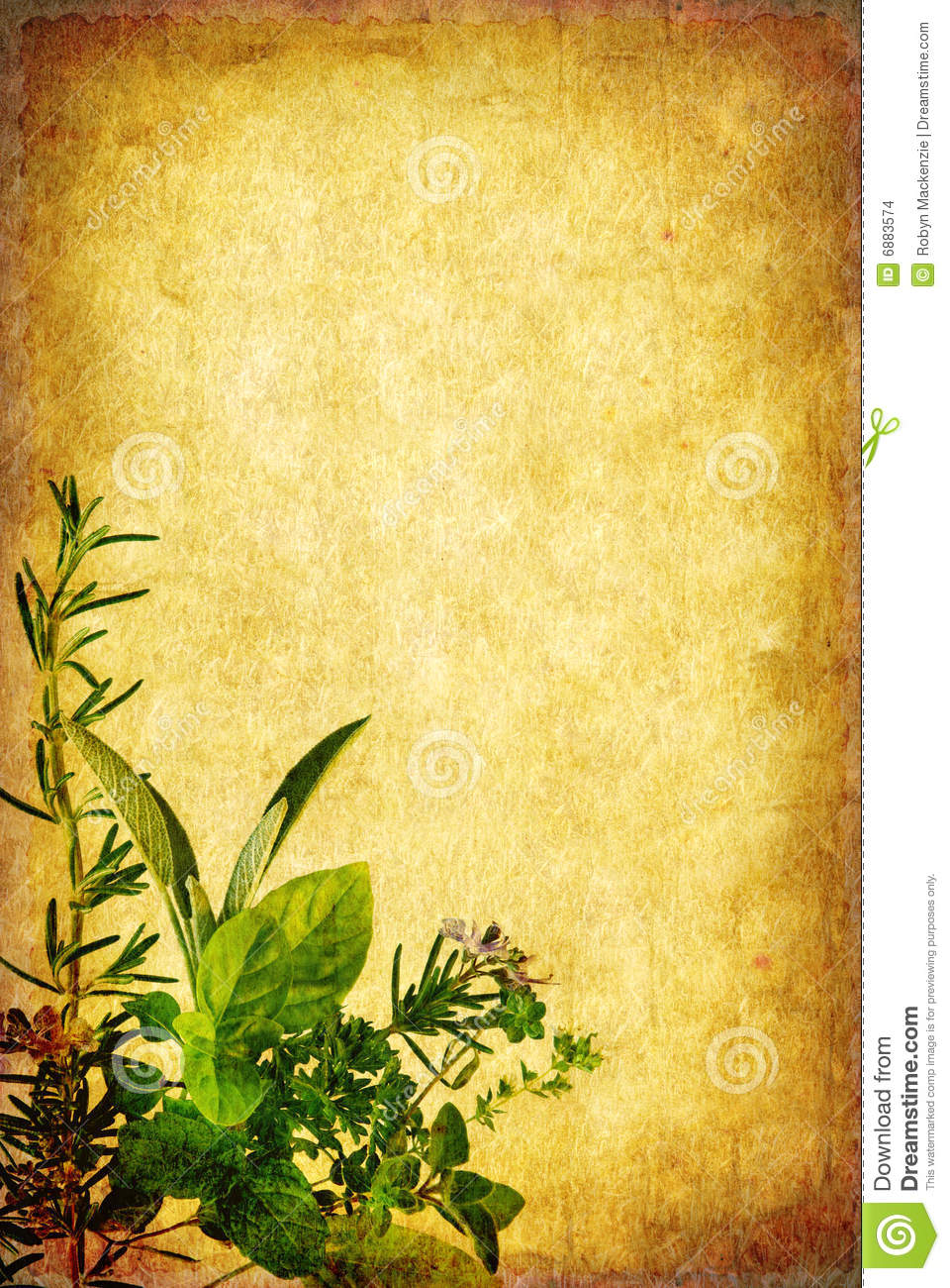 Grunge Herb Background Stock Images Image 6883574