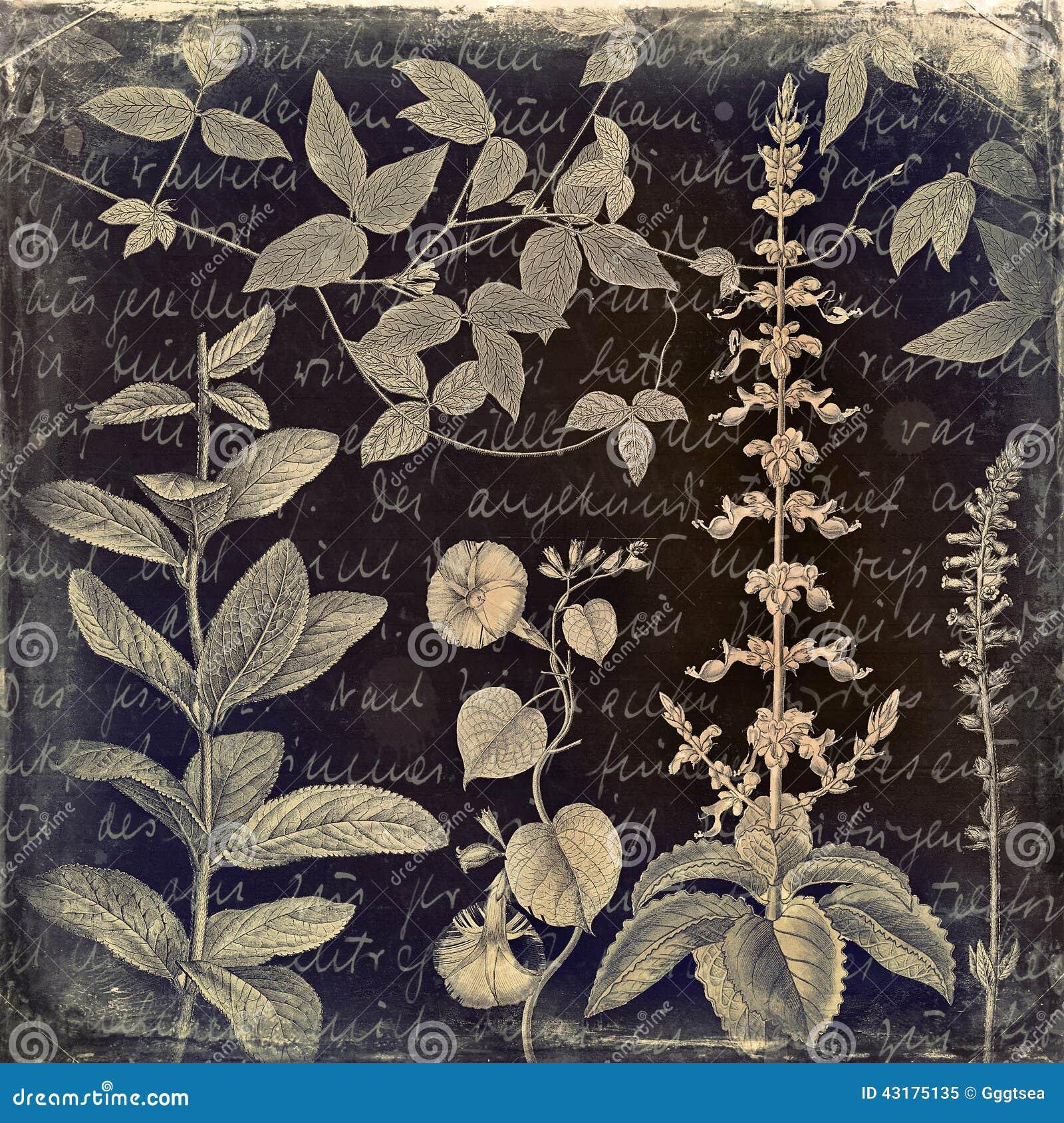 Grungy botaniczny rocznika tło