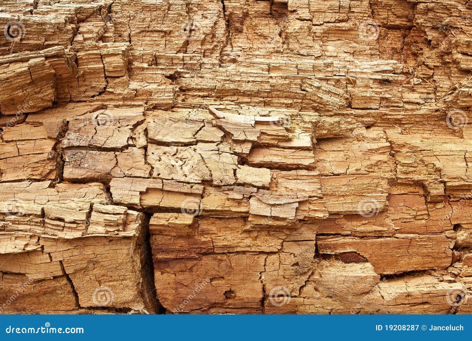 Grungy rotte houten textuur