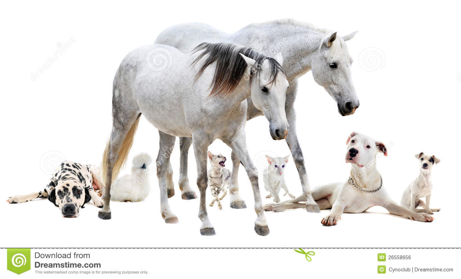Grupa biały zwierzę domowe