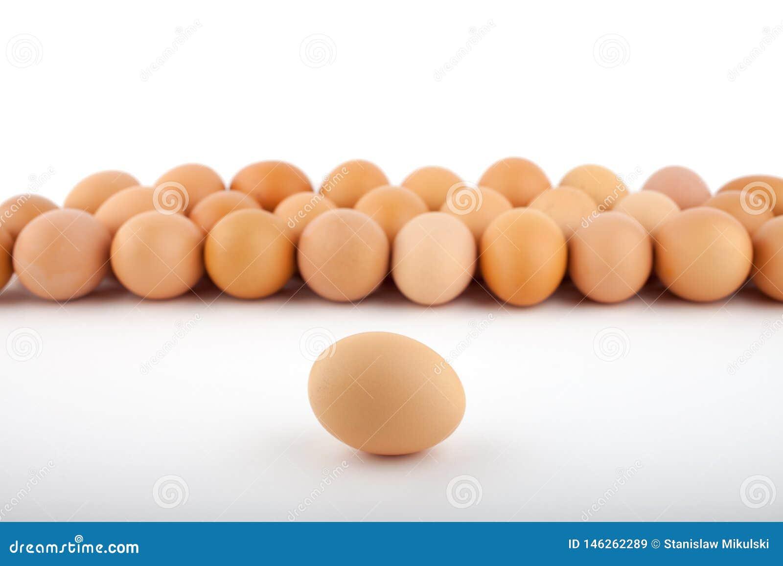 Grupa br?zu kurczaka jajka z jeden jajkiem naprz?d na bia?ym tle