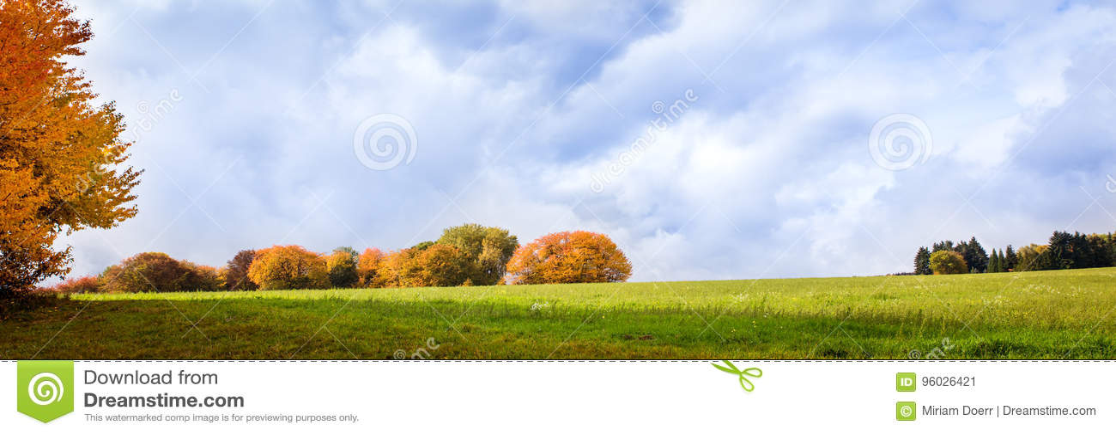Grupa drzewa przy jesień sezonem