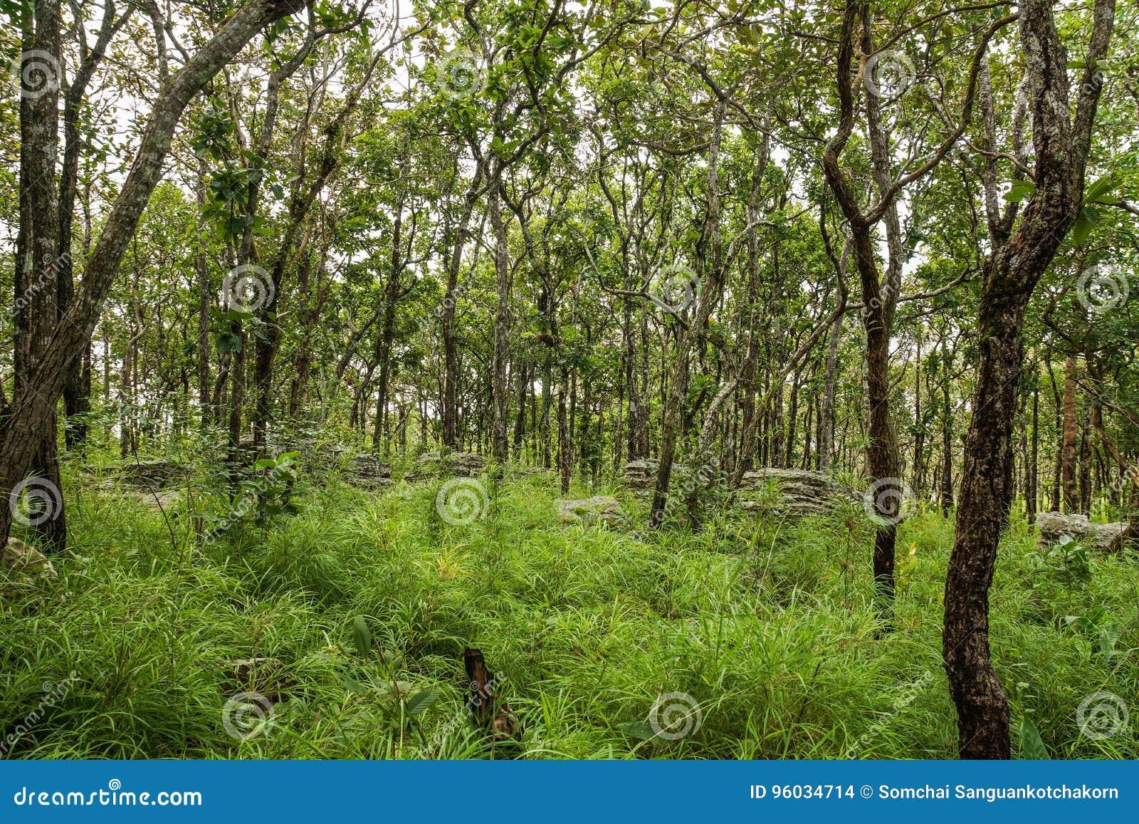 Grupa drzewa w parku narodowym