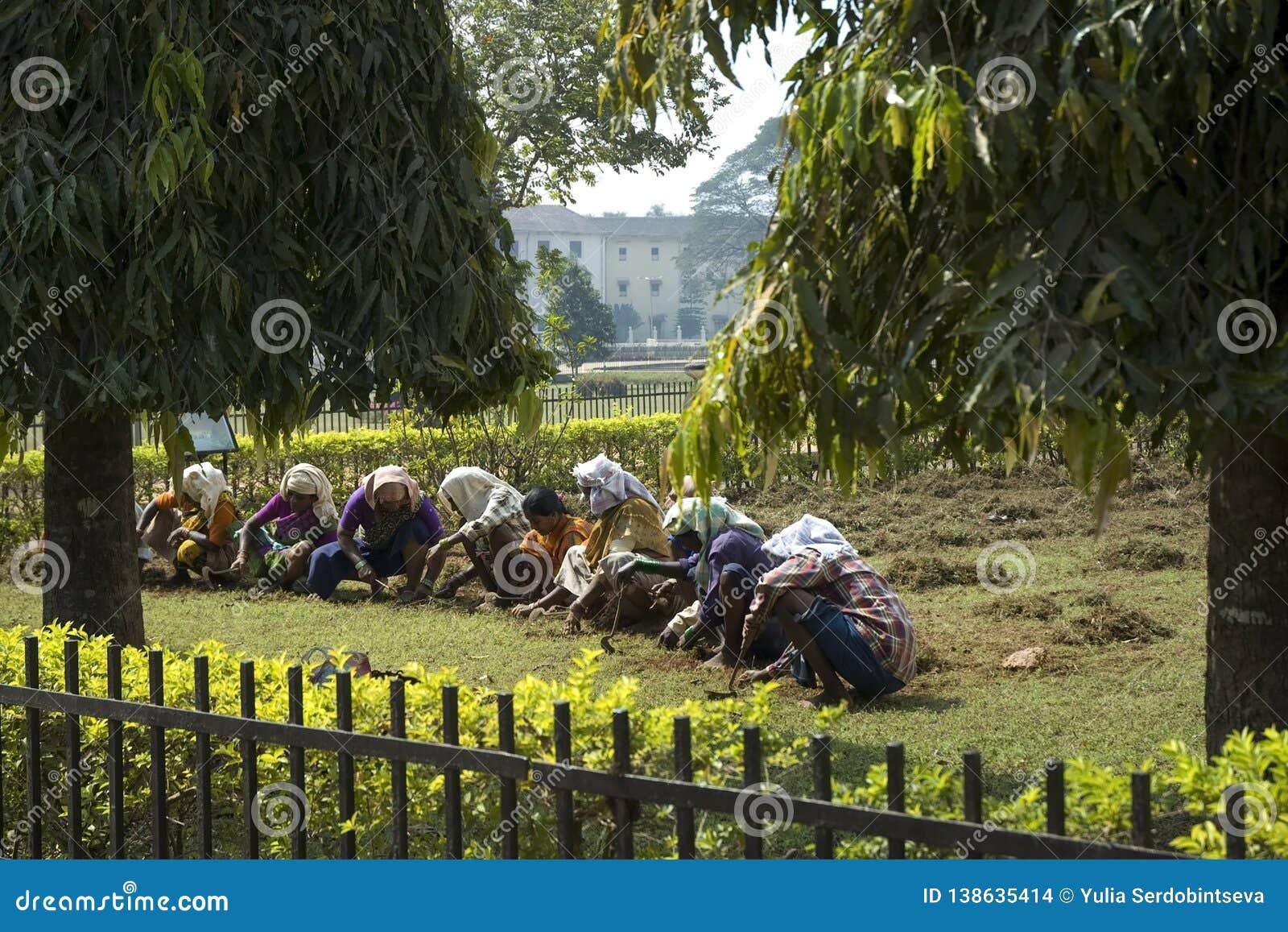 Grupa Indiańskie kobiety pracuje w ogródzie indyjska kobieta India, Nowy styczeń 29, 2009