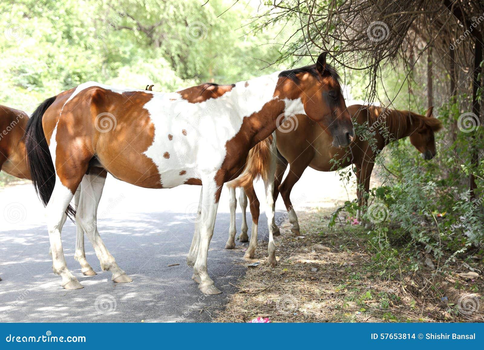 Grupa konie stoi pod cieniem