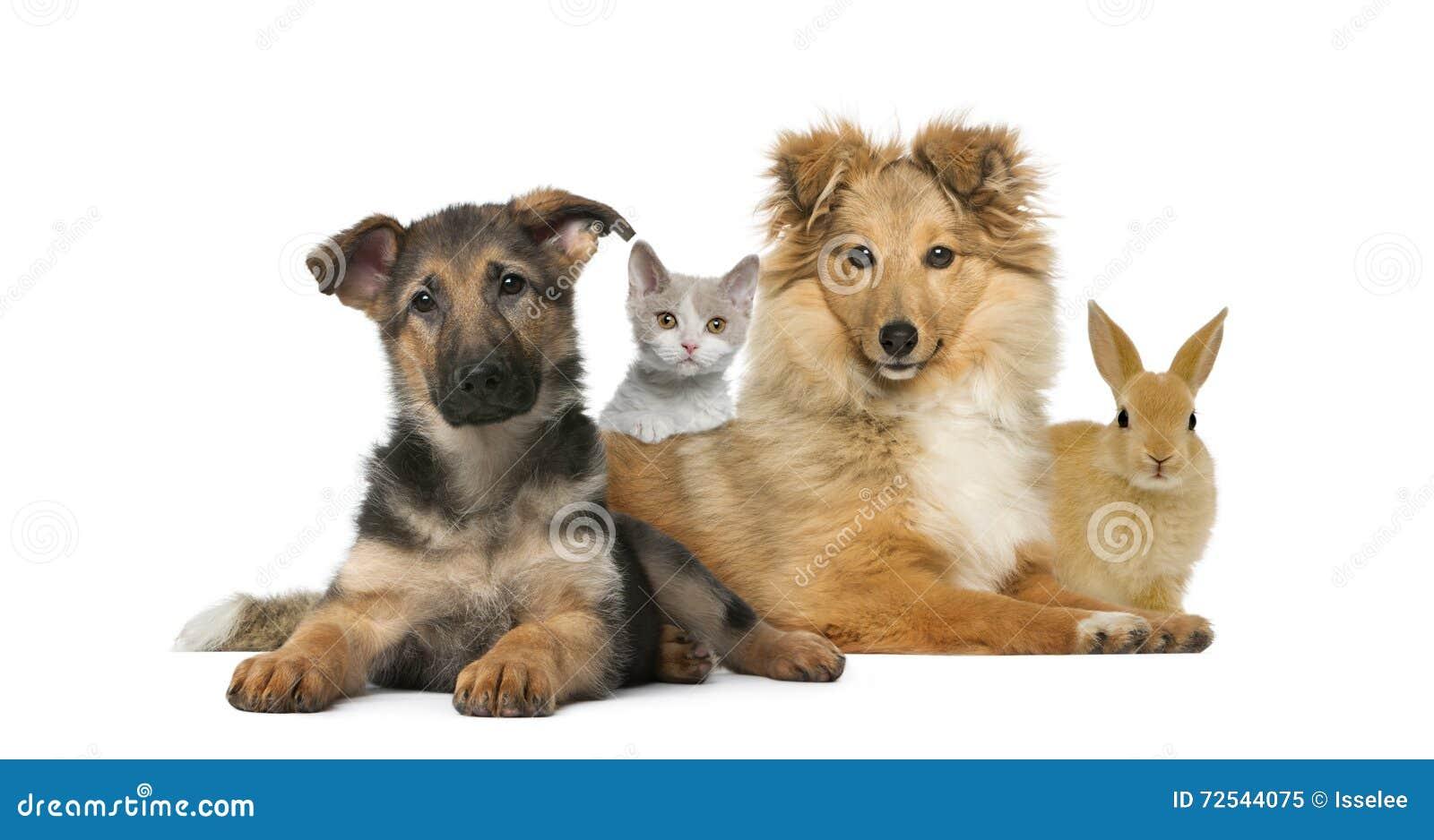 Grupa młodzi zwierzęta domowe