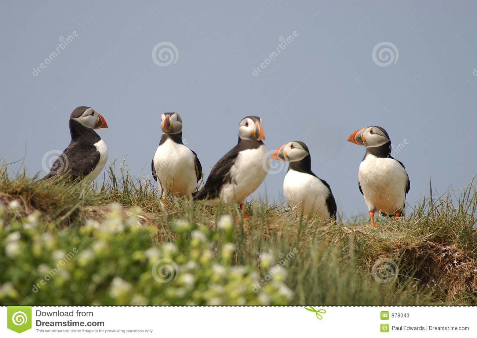 Grupa maskonury