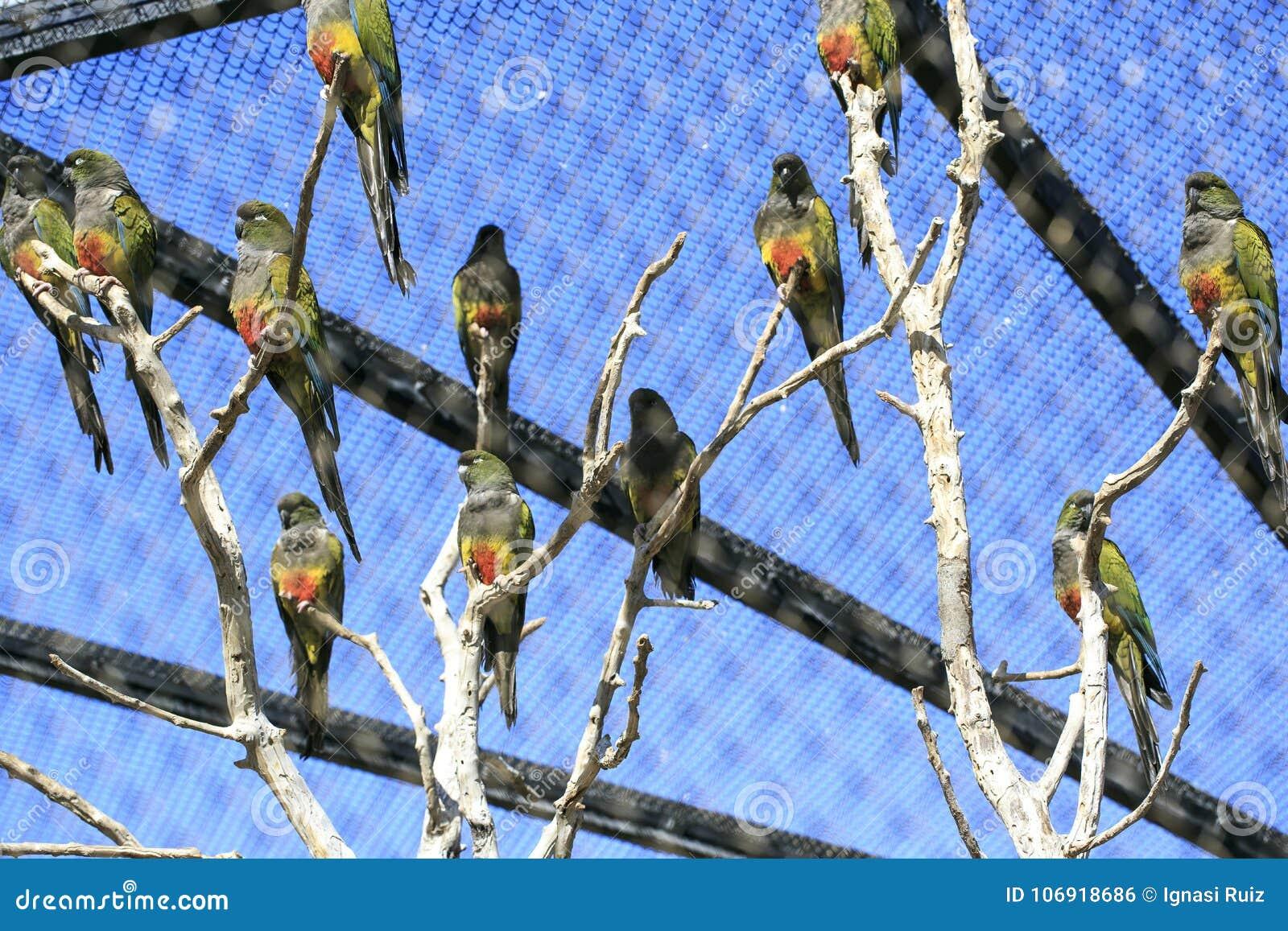 Grupa papugi w zoo