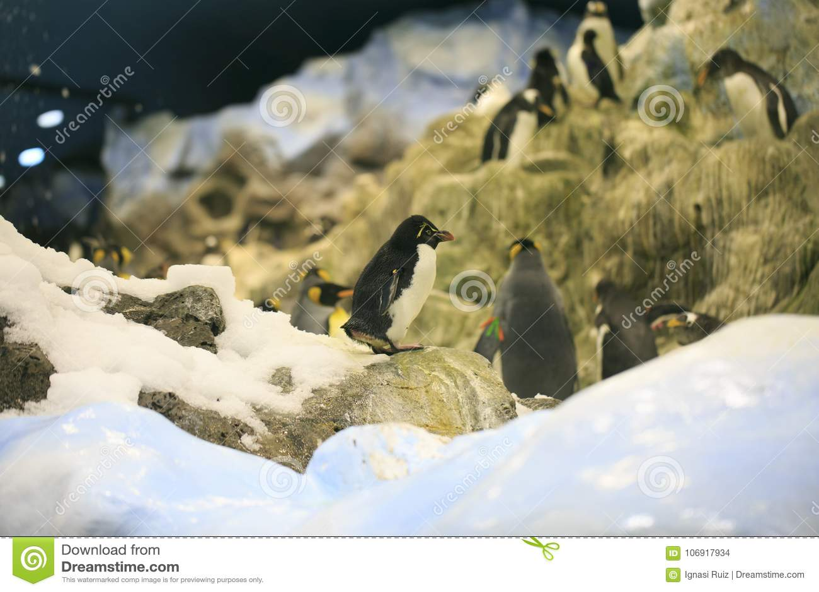 Grupa pingwiny w zoo