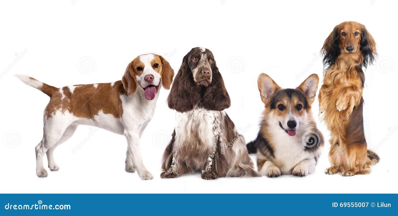 Grupa psy,