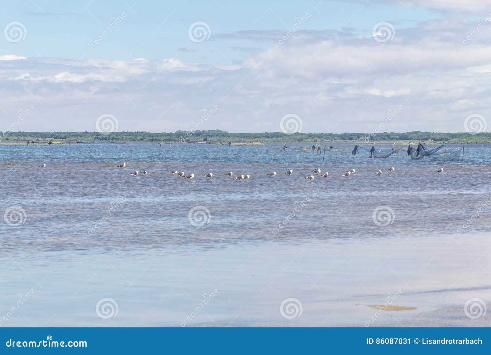 Grupa seagull