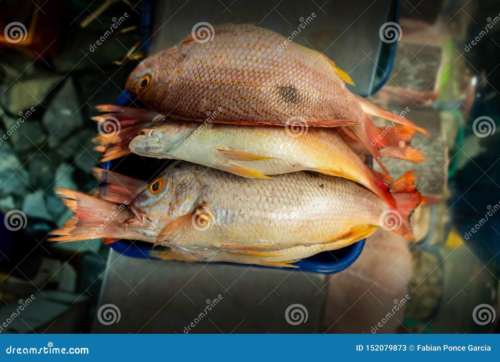 Grupa wystawiająca w rynku z unfocused tłem ryba