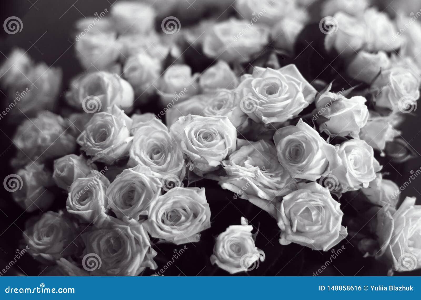 Grupo bonito das rosas preto e branco próximas acima da imagem
