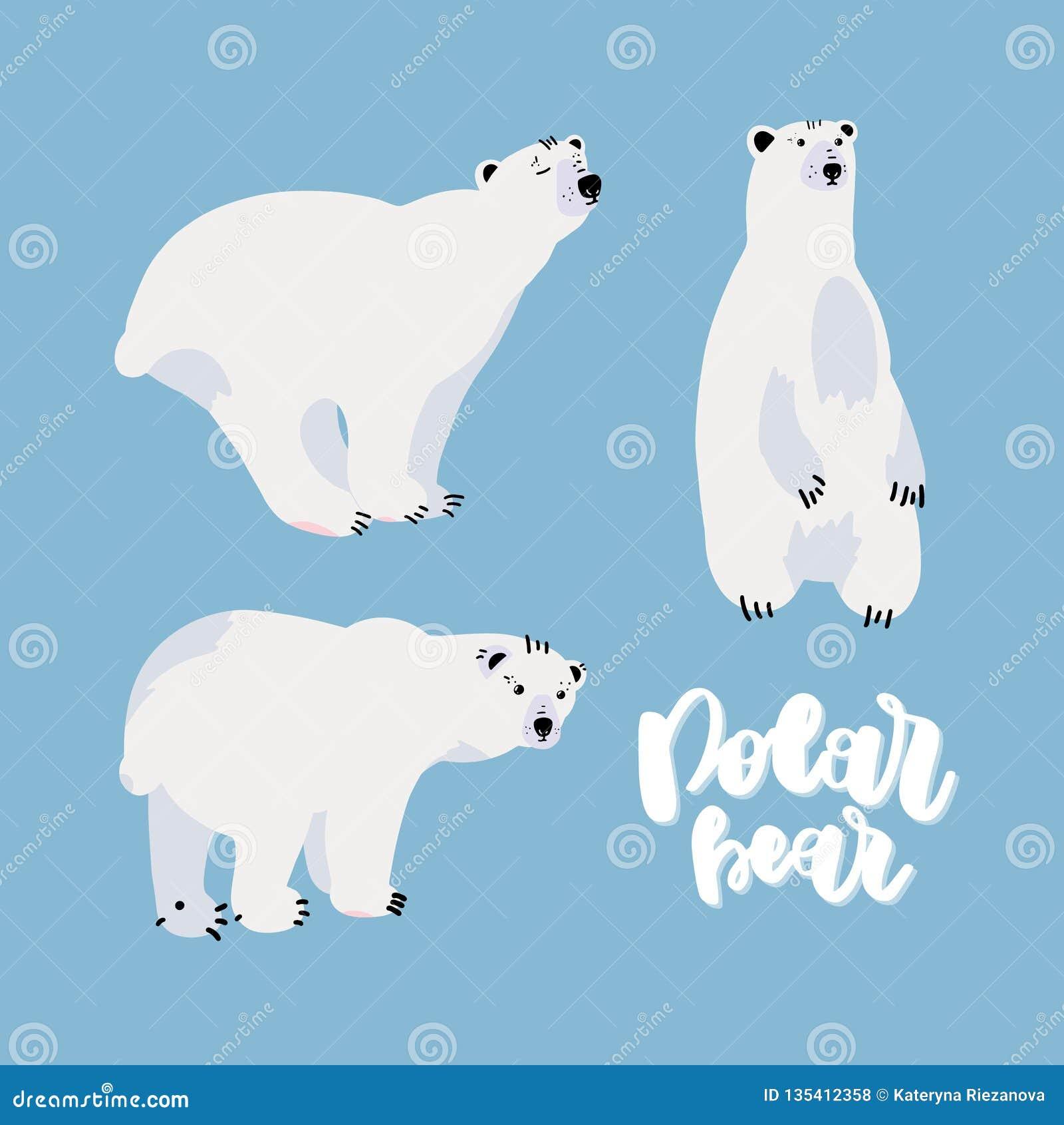 Grupo bonito do urso polar