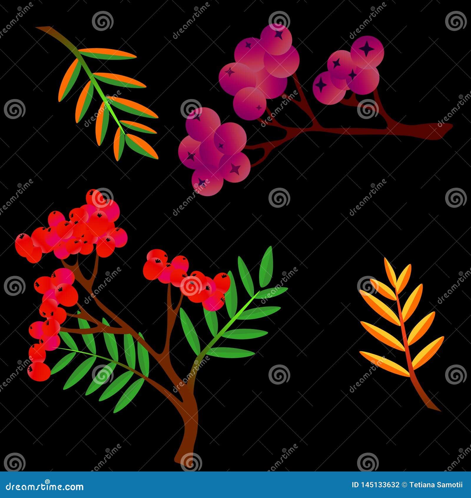 Grupo colorido das folhas do outono isolado no fundo branco Cole??o dos desenhos animados no estilo liso Vetor