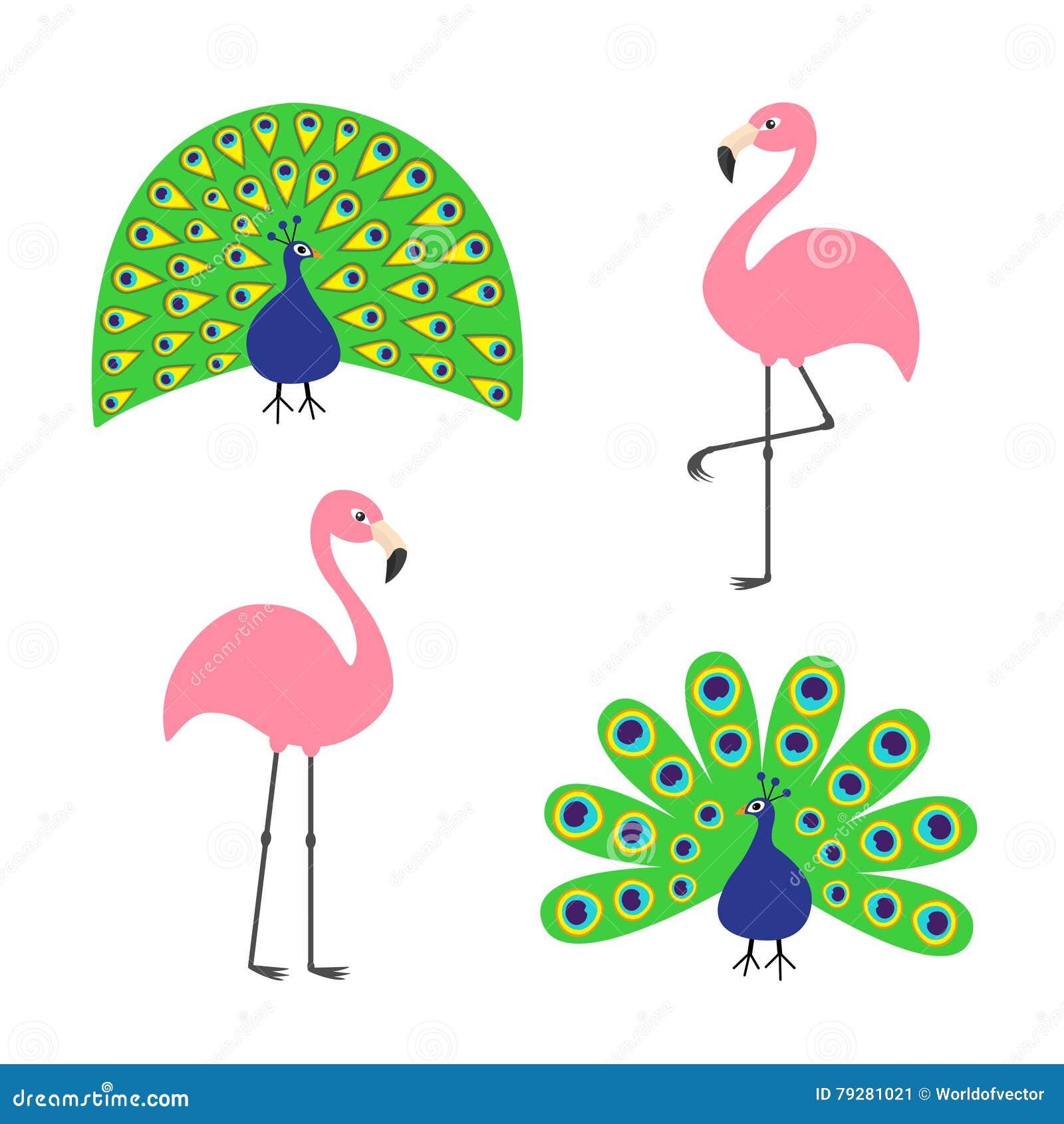 Grupo cor-de-rosa do flamingo do pavão Da pena cauda aberta para fora Pássaro tropical exótico bonito