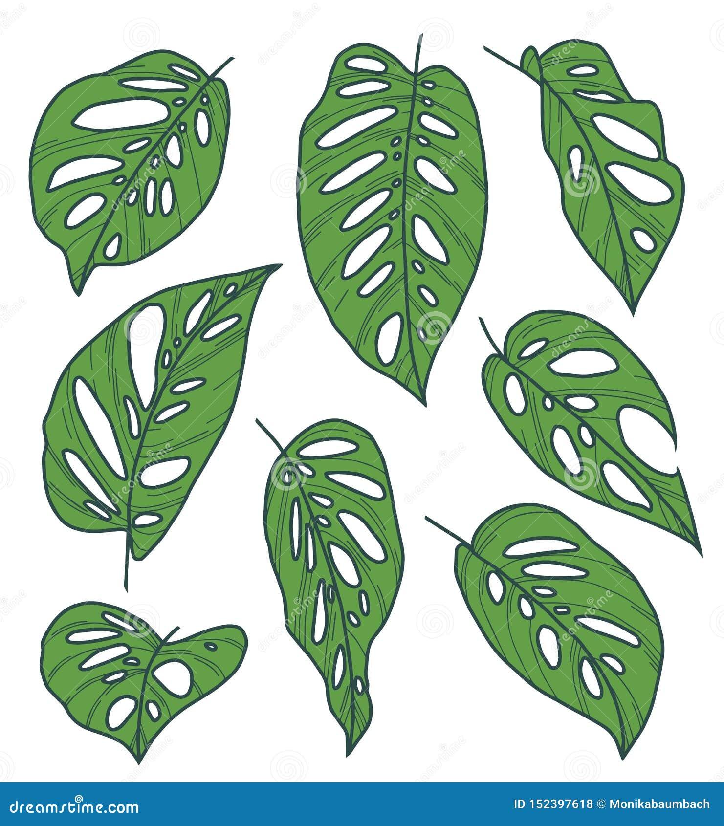 Grupo Da Colecao Do Vetor De Desenhos Exoticos Da Folha Da Planta