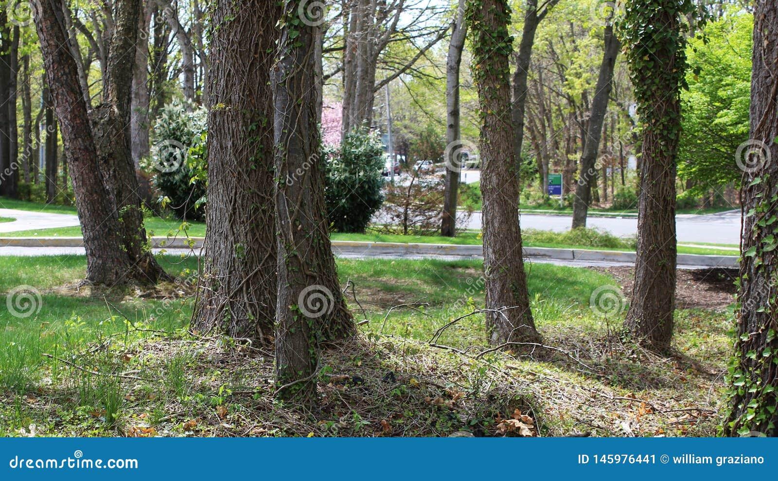 Grupo de árboles en un paisaje pacífico