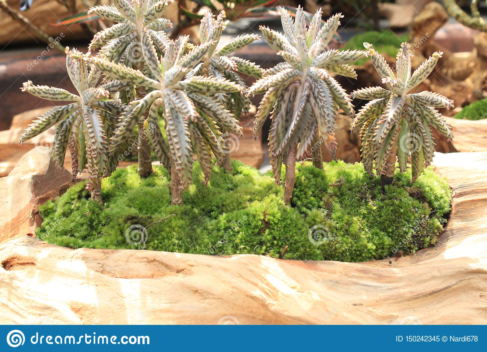 Grupo de árvore de coco minúscula