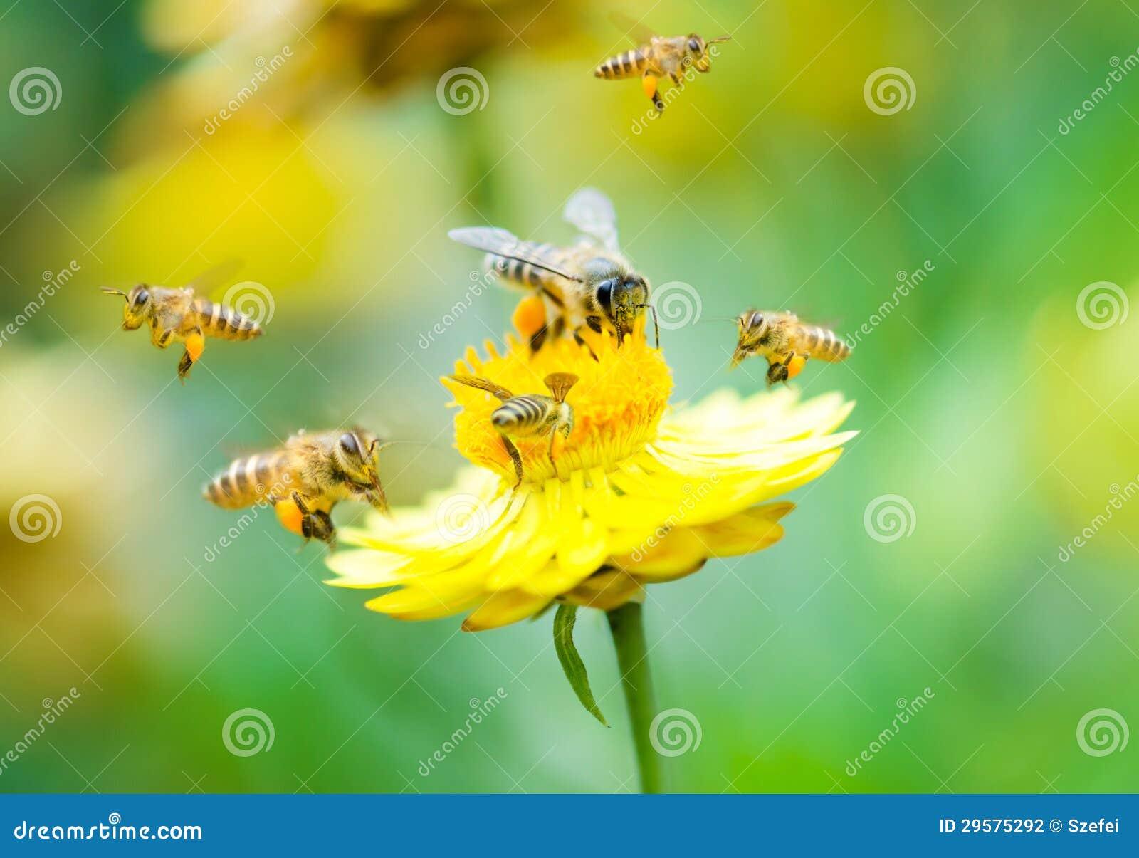 Grupo de abejas en una flor