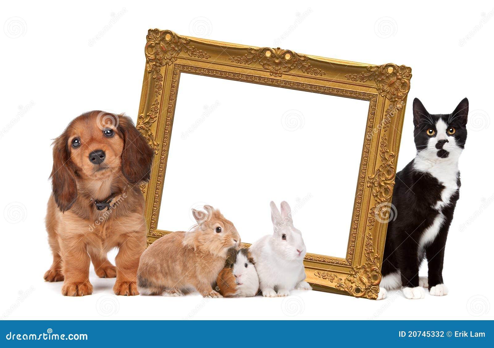 Grupo de animais de estimação