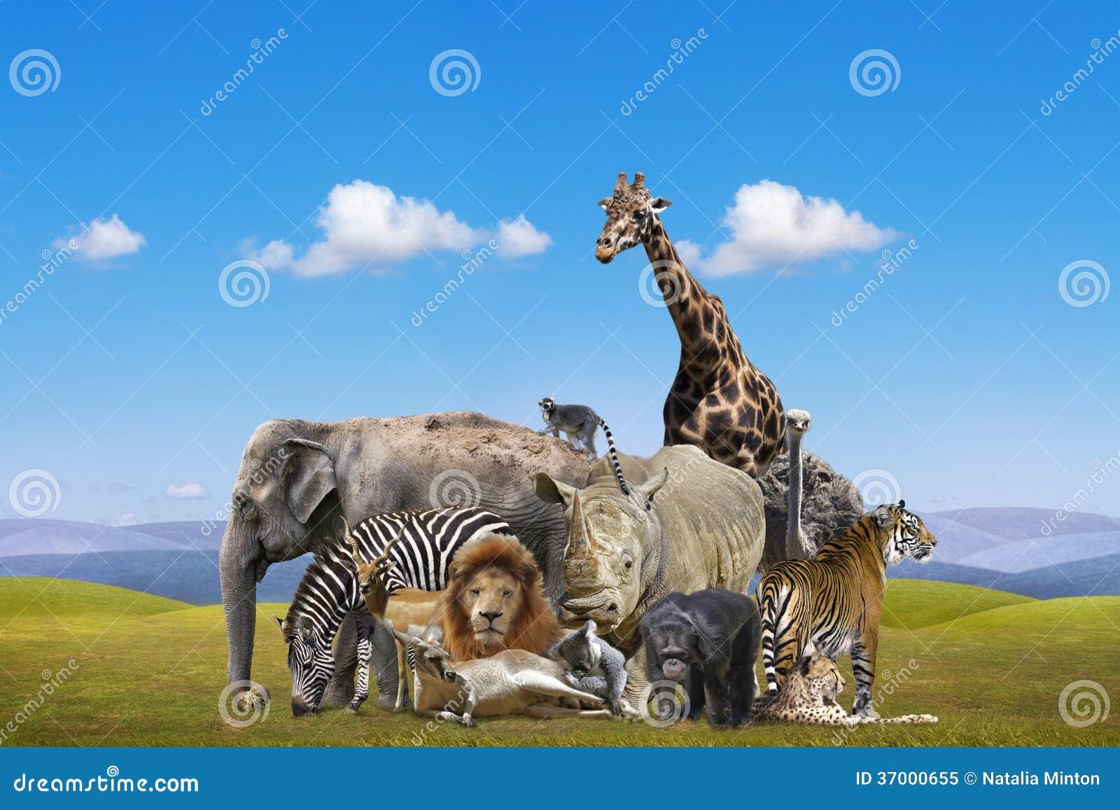 Preferência Grupo de animais selvagens imagem de stock. Imagem de leopardo  LC81