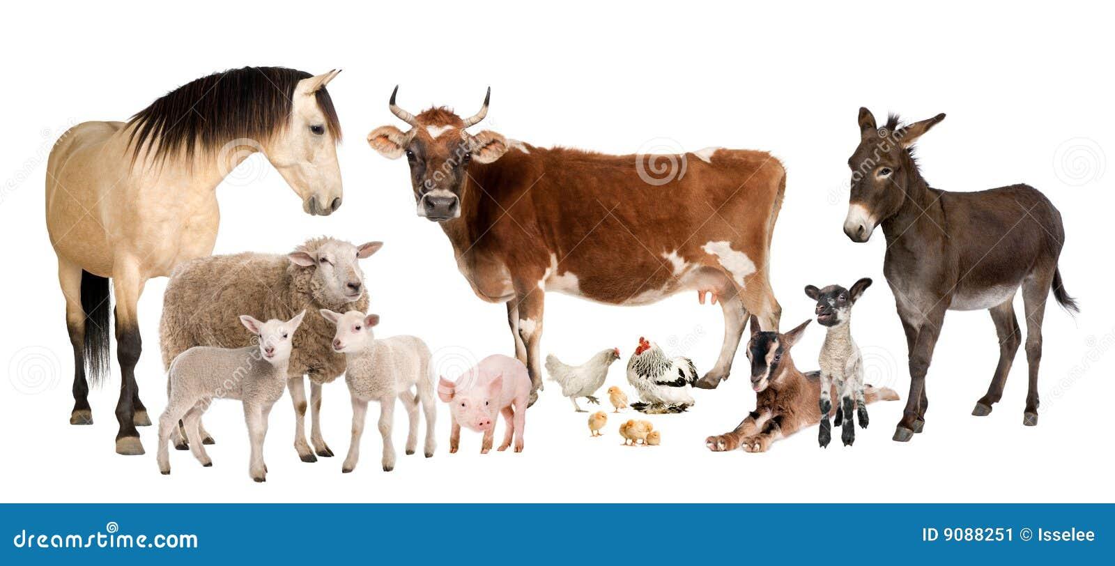 Grupo de animales del campo: vaca, oveja, caballo, burro,