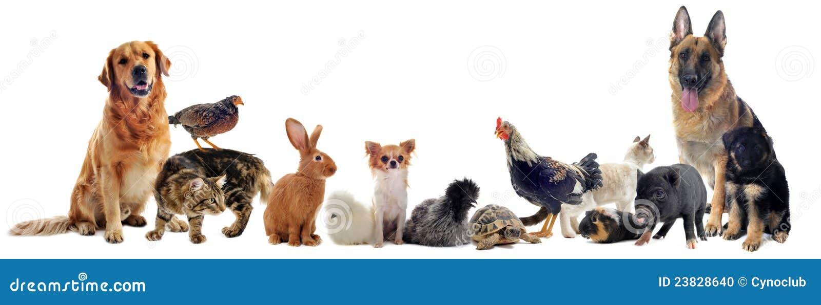 Grupo de animales domésticos