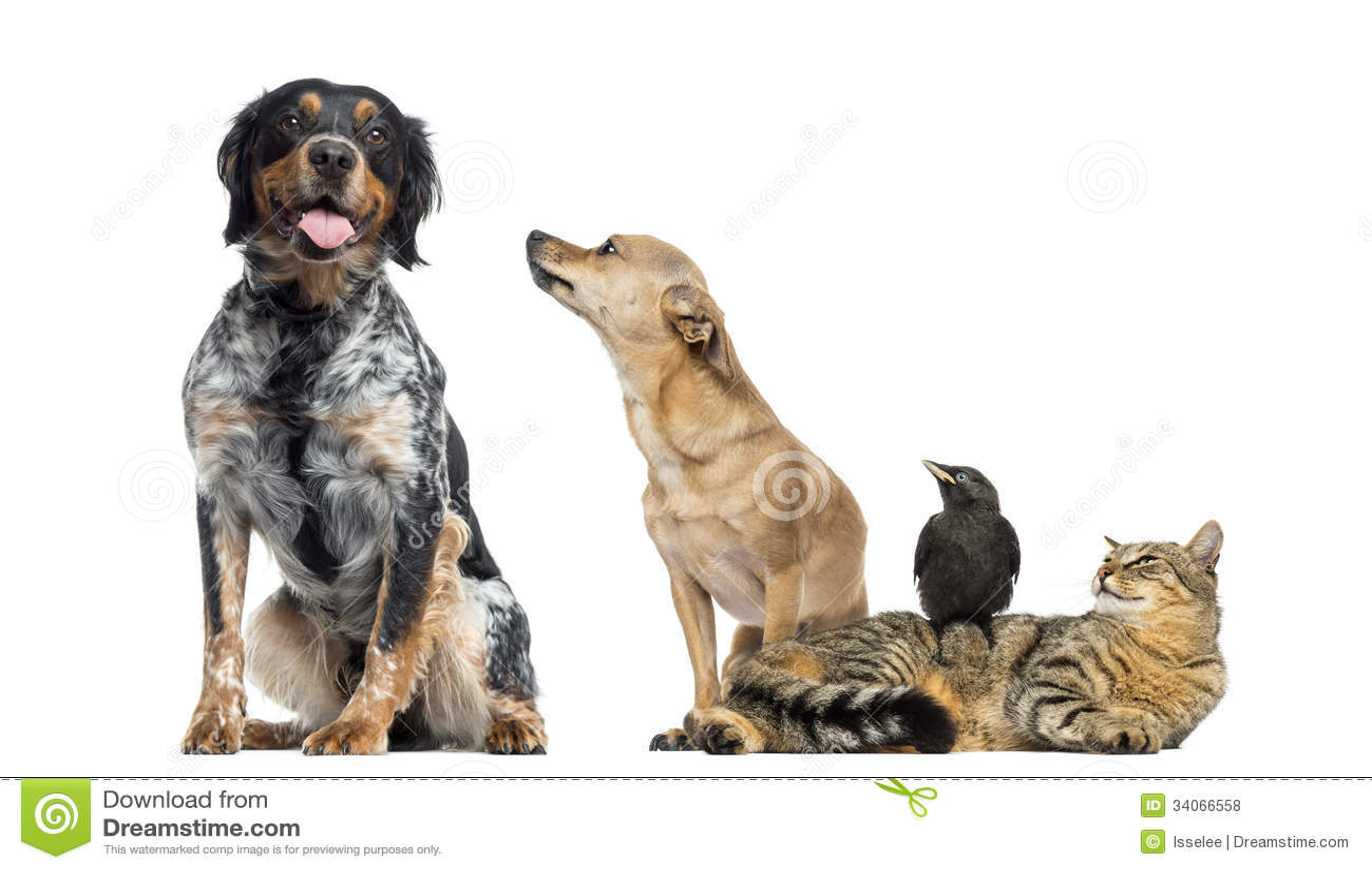 Grupo de animales domésticos, aislado