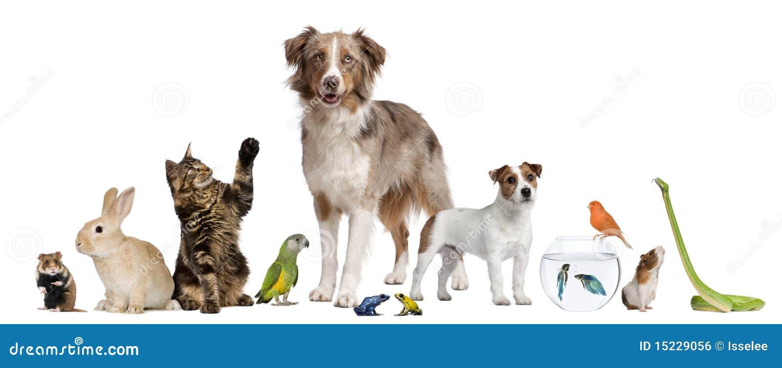 Grupo de animales domésticos junto