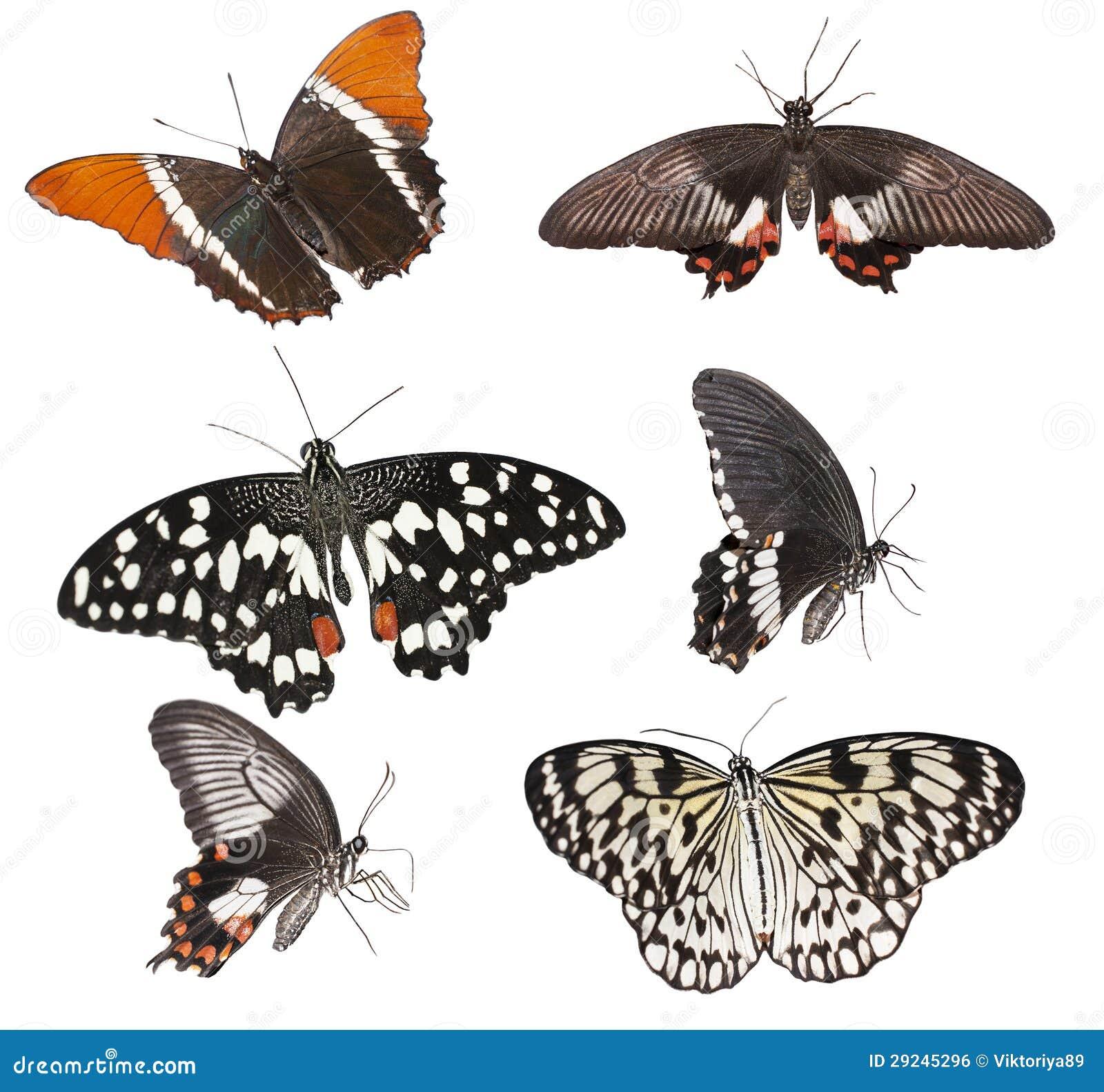 Download Grupo de borboletas foto de stock. Imagem de azul, erro - 29245296