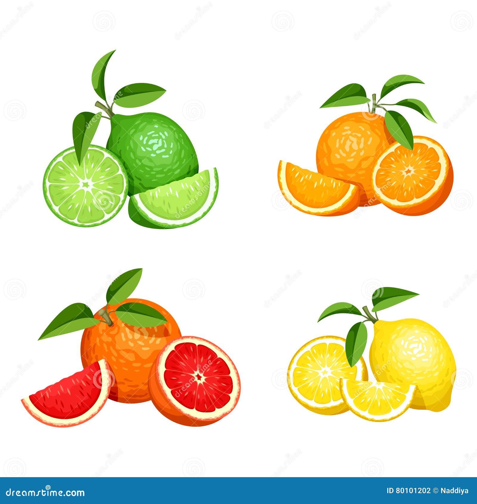 Grupo de citrinas isoladas no branco Ilustração do vetor