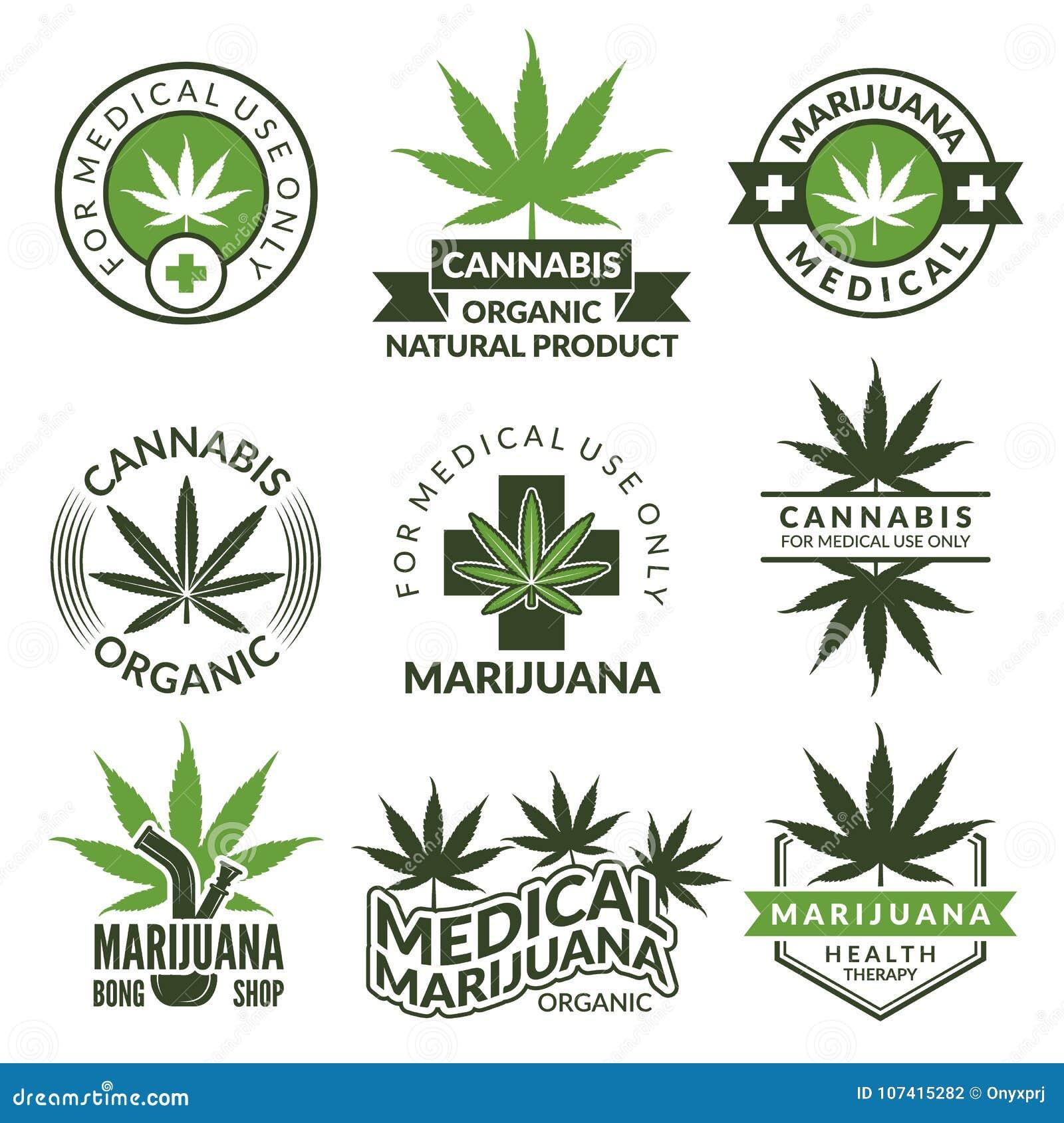 Grupo de etiquetas com imagens diferentes de plantas de marijuana Ervas médicas, folha do cannabis