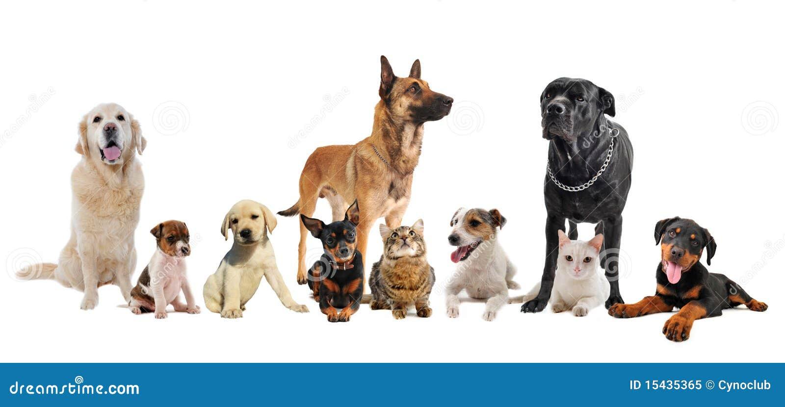 Grupo de filhotes de cachorro e de gatos