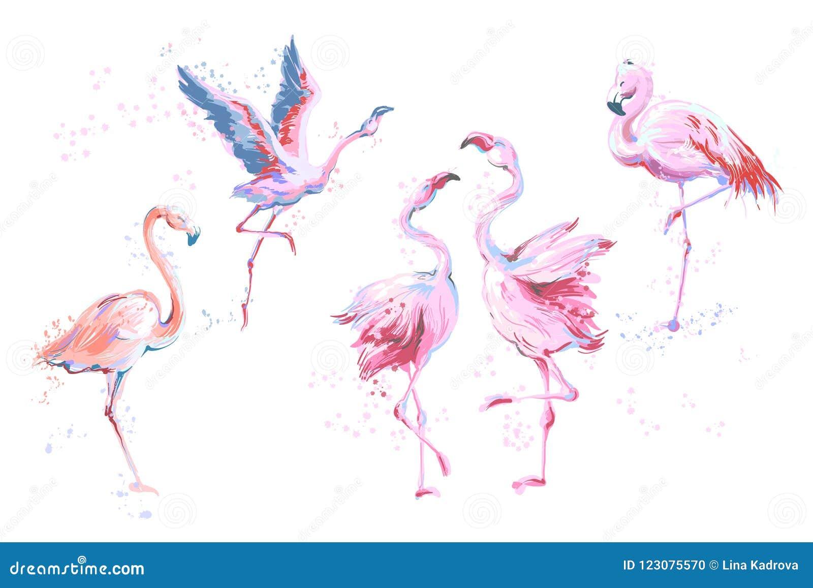 Grupo de 5 flamingos esboçado do estilo de imitação da aquarela do vetor isolados no branco Ilustração do vetor do flamingo cor-d