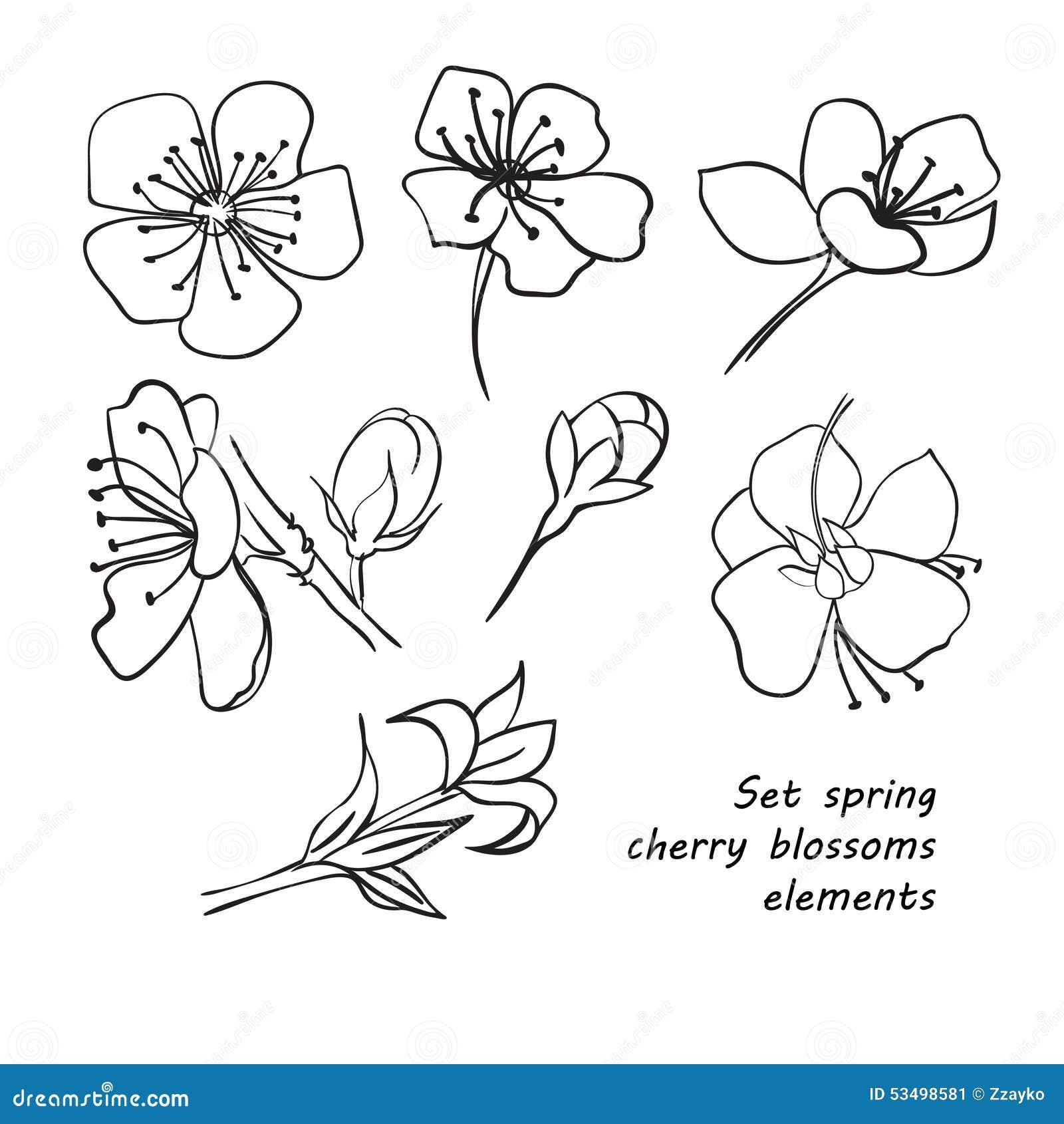 Grupo De Flores Da Flor Cerejeira Mola Desenho