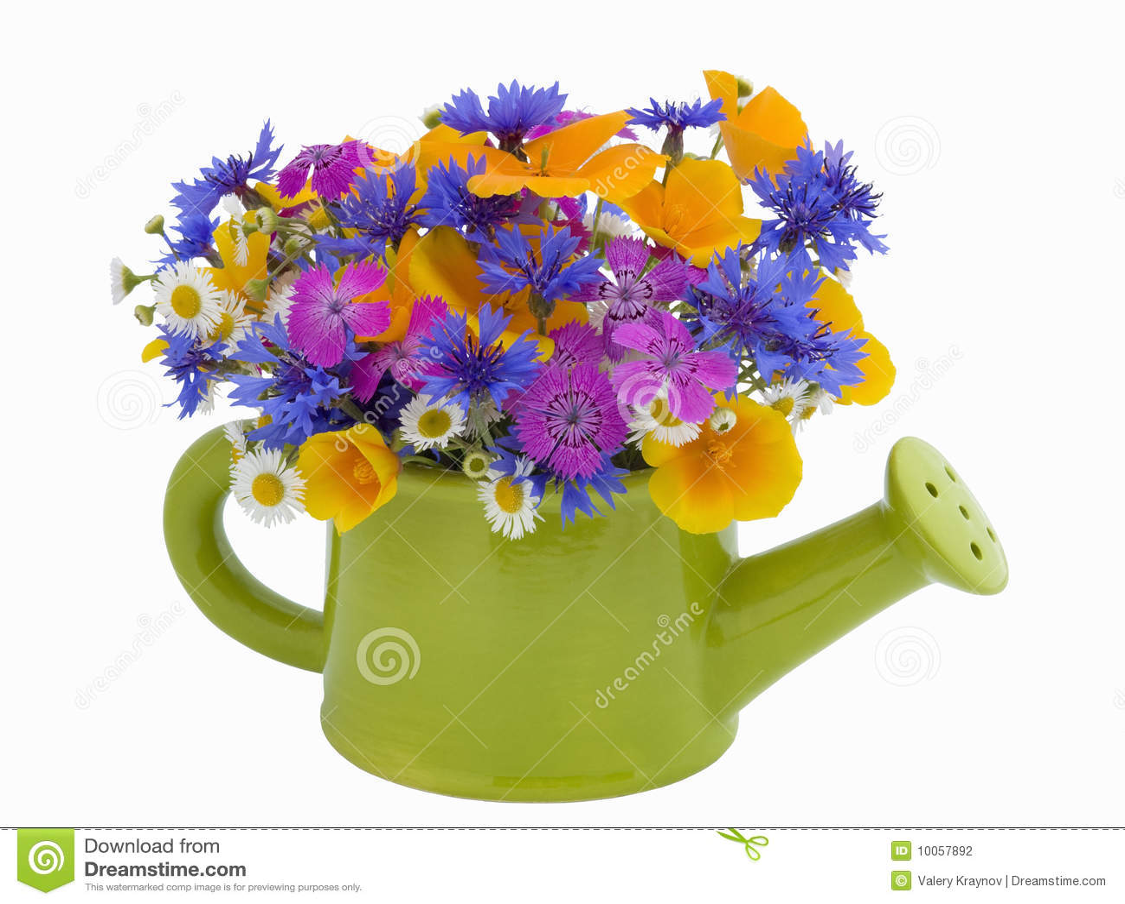 Grupo de flores no potenciômetro molhando